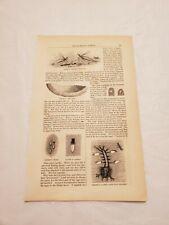 Cr33) Mosquito Eggs Larva Pupa 1858 Harper's Monthly Engraving