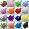 Wholesale! 20/50/100 pcs Beautiful natural goose feather 6-8 inches / 15-20 cm