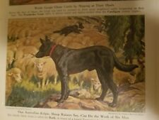 E H Miner Australian Kelpie Bookplate from 1941 National Geographic Magazine