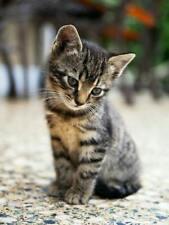 PET PROTECTOR DISC 'GENUINE' FLEA/TICK REPELLENT FOR DOGS/CATS ETC LASTS 4 YEARS