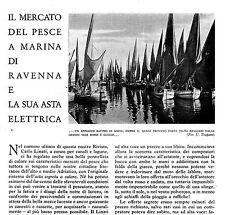 MARINA DI RAVENNA PORTO CORSINI MERCATO DEL PESCE ASTA ELETTRICA BIAGIO CORSINI