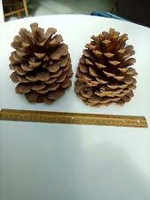 Two Large Pine Cones