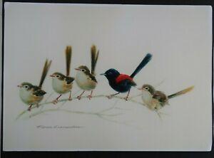RED BACKED FAIRYWRENS Fiona Lumsden Blue Mountains wildlife artist PRINT