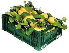 Confezione di Limoni NON TRATTATI - Prodotti in Calabria - Buccia edibile