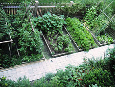 25 variety heirloom garden vegetable seeds non-gmo non-hybrid organic survival