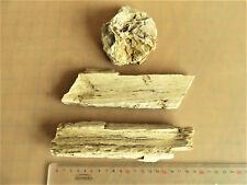 bois fossile silicifié haute normandie