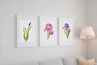 "3 Iris Flower Giclée Watercolor Art Prints 8""x10"" Unframed - New - Free Shipping"