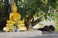 ** Buddha fand unter dem Ficus religiosa  seine Erleuchtung ! Zimmerbaum Exot !