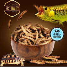 Blood Worm Freeze Dried Fish Food Feed for All Kinds of Tropical Aquarium Fish