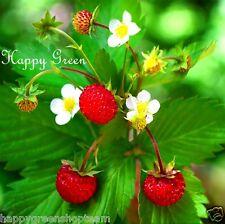 Alpine Strawberry -  270 SEEDS - Fragaria Vesca Baron Solemacher - PERENNIAL