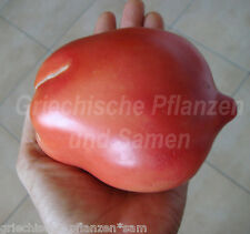 🔥 🍅 NEW ZEALAND PINK PEAR Tomate * Riesen-Tomaten* 10 Samen