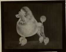 Rare Photograph Negative of One of Francis Fretwell's Champion Poodles Unnamed