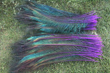 10pcs purple peacock feather sword 12-14 inch left and right sides symmetrical