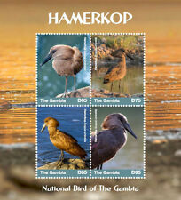Gambia 2018 Fauna birds animals Hamerkop I201803