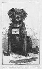 La colección Southsea & Ryde Perro freno' - antigua de impresión de 1883