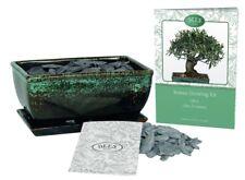 Grow Your Own Bonsai Tree Kit Gift Set - (Olive)