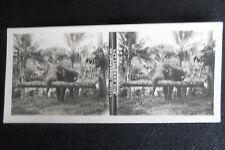 PHOTO STEREOSCOPIQUE CEYLAN SRI LANKA TRANSPORT DE BOIS D'ARBRES  ELEPHANT 1905