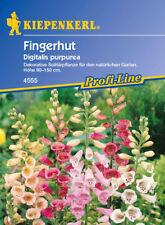 Kiepenkerl - FOXGLOVE 4555 résistant au froid arbuste en pastel