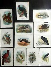 Lloyds's 1897 Lot of 12 Antique Bird Prints, Book Plates
