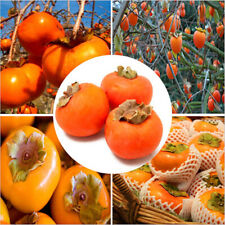 30 Persimmon Fruit Tree Seeds Mixed Delicious Japanese Bonsai Plant Home Garden