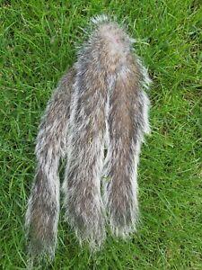 3 Dried Grey Squirrel Tails Taxidermy Fly Tying