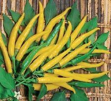 Hot Chilli Pimienta-Ljuti 10 semillas-liveseeds -