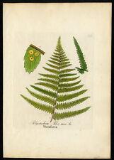 1860 DIETRICH - FORSTPFLANZEN Wurmfarn (Polystichum filix mas.) #232