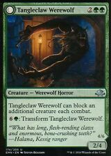 4x tangleclaw Werewolf/fibrous entangler | nm/m | Eldritch Moon | Magic mtg
