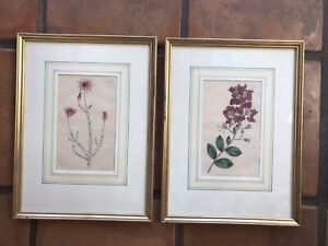 2 Hand Colored William Curtis Botanical Engravings