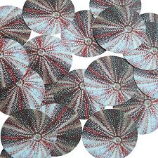 """Round Sequin 1.5"""" Urchin Shell Ocean Sealife Red Gray White Opaque"""