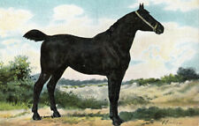 Antique Print-LITHOGRAPH-IRISH HORSE-Eerelman-1898