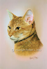 Abyssinian Cat Head Study Print by Robert J. May