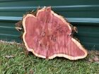 Natural Live Edge Cedar Wood Slice Table Top Epoxy Craft Taxidermy Unique #29