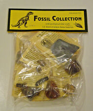 FOSSIL COLLECTION, 12 DIFFERENT IDENTIFIED SPECIMENS, EXC (#2)