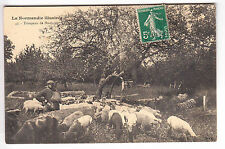 CPA  NORMANDIE EURE 27  -  TROUPEAU DE MOUTON SHEEP BERGER ELEVAGE ~A72