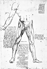 Leonardo Da Vinci Muscles of the Lower Extremity  Anatomy Poster Print Art
