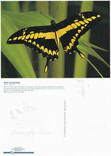 GIANT SWALLOWTAIL BUTTERFLY BRONX ZOO 1996 UNUSED COLOUR POSTCARD