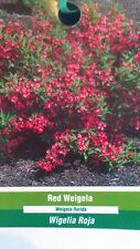 3 gal. Red Weigela Shrub Live Flowering Shrubs Healthy Home Landscape Plants