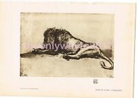 Study of a Lion, by Rembrandt, Book Illustration (Print), c1910