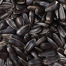 Semi di Girasole Nero Mangime per uccelli, criceti, pappagalli 100% biologico