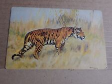 Postcard  Tigers In The Long Grass Posted 1930