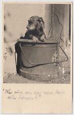 DACKEL / SAUSAGE DOG / TECKEL / DACHSHUND / BASSET * Vintage 1940s Amateur RPPC