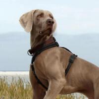 Rogz Dog H-Harness Utility Line - Small / Medium / Large / XL