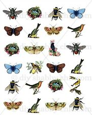 A5 OLD STICKER BEE BUGS INSECTS DECAL CHIC FRENCH IMAGE TRANSFER VINTAGE LABELS