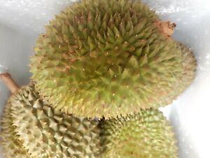 Durian Fresh whole Fruit King size more than 1.3kg(UK Free Postage )