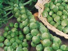 """Brussel Sprouts """"200 Seeds"""" Unusual Garden Vegetable"""