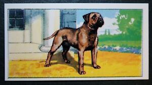 BULL MASTIFF  Guard Dog   Superb  Original Vintage Card  CAT J