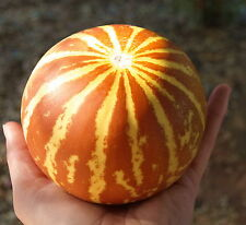 Tigger Melon Heirloom | Fun & Easy | Great For Kids | Sweet & Yummy | 15 Seeds