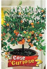 Semi/Seeds ARANCIO - Citrus Sinensis