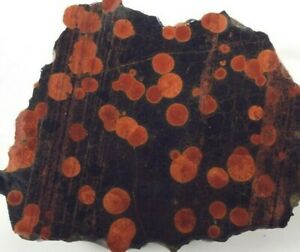 "Rare Mexican Peanut Obsidian Slab Rough Rock 2.5""X2"" X1/8"" 22 Grams"